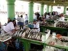 União propõe restrição à pesca da tainha; pescadores do RS são contra
