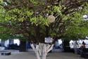 Fãs visitam Parque Aza Branca para ver relíquias de Gonzagão