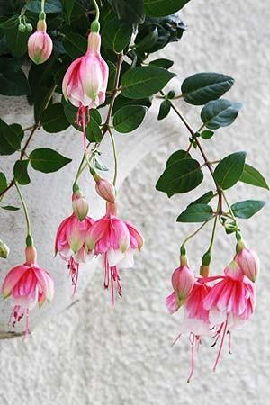 Plantas: as top 50