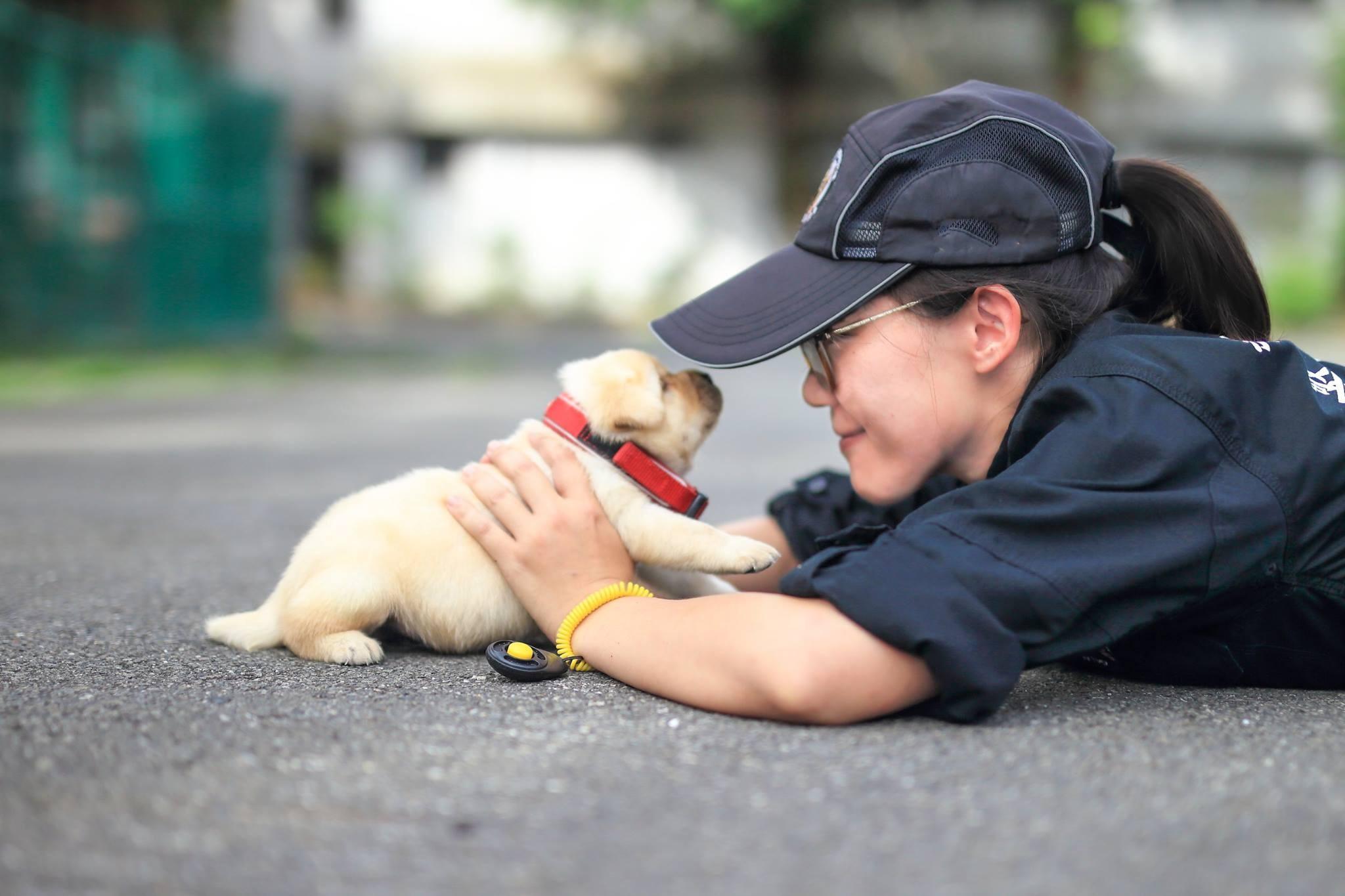 Cãozinho (Foto: Divulgação/Facebook NPA)