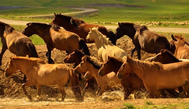 União entre homem e cavalo: jornalismo da EPTV está no Globo Repórter desta sexta (Foto: Dirceu Martins)