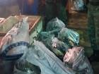 Mais de 250 kg de pescado ilegal são apreendidos durante operação no AM