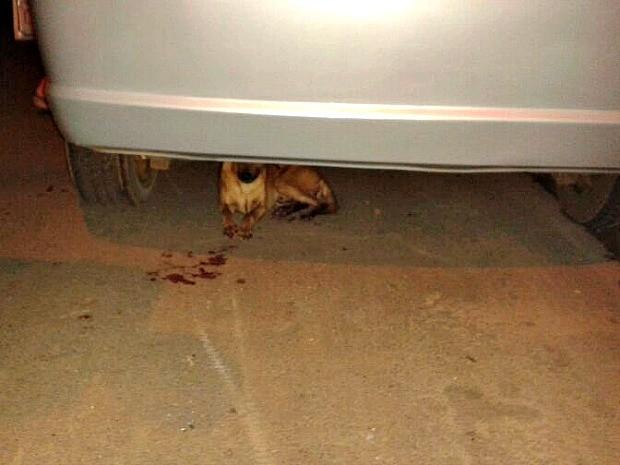 Cachorro castrado de forma violenta foi encontrado (Foto: Vanessa Facundes / Arquivo Pessoal)