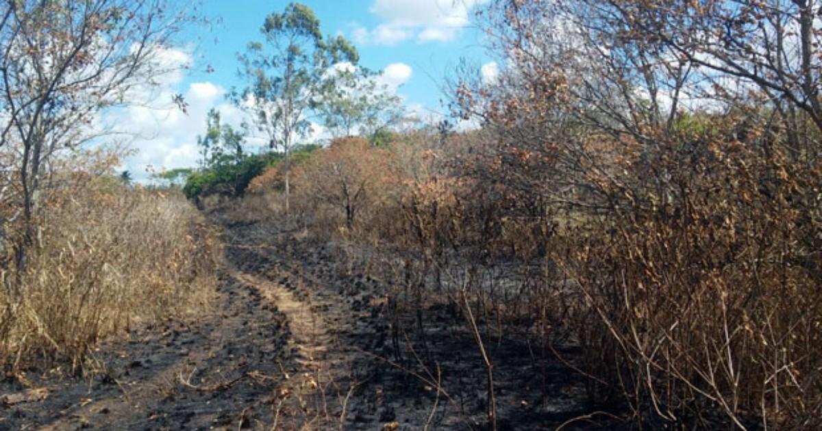 Incêndio destrói 150 árvores de pau-brasil em reserva de PE - Globo.com
