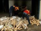 Polícia incinera quase 4 toneladas de drogas apreendidas, em Anápolis