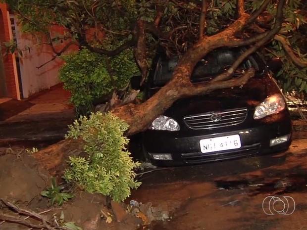 Árvore caiu sobre carro após chuva e ventania em Goiânia Goiás (Foto: Reprodução/TV Anhanguera)