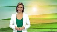 Gisele Loeblein comenta a safra de grãos no estado