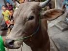 Primeiro caso de vaca louca é detectado na Irlanda desde 2013