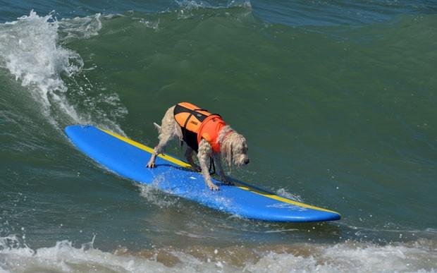 Cachorro participa de campeonato de surfe na Califórnia, nos EUA, (Foto: Mark Ralston/AFP)