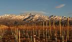 Amantes de vinho podem ter sua própria vinícola na Argentina