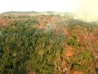 Sul do Pará abriga cemitérios de árvores derrubadas e queimadas