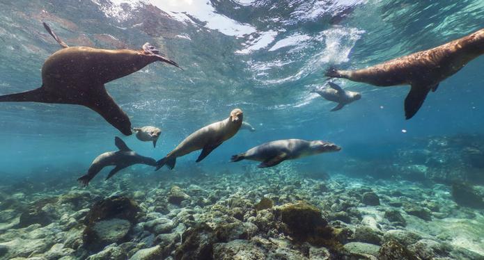 Imagens subaquáticas das Ilhas Galápagos no Street View do Google Maps (Foto: Reprodução/Paulo Finotti)
