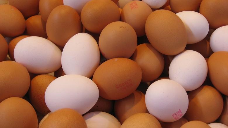 ovos-aves-galinha-granja-galinheiro (Foto: 169clue/CCommons)