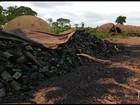 Operação de combate à extração de madeira cumpre 16 mandados no MA