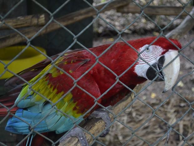 Cerca de 70 animais, como araras, foram retirados da Revecom, no Amapá (Foto: John Pacheco/G1)