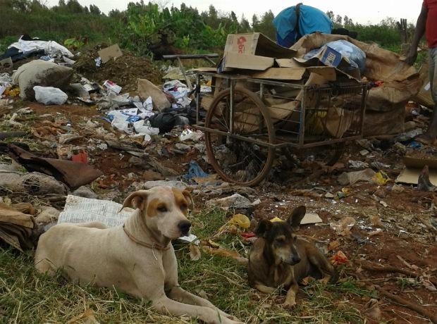 Cachorros são presença constantes no lixão de São João do Caiuá (Foto: Wilson Del Passo/RPC TV)