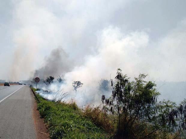 queimadas polícia meio ambiente uberlândia br-050 (Foto: PM de Meio Ambiente/ Divulgação)