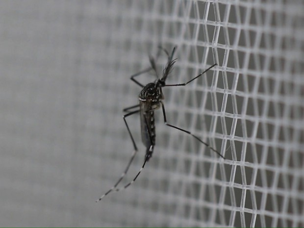BDBR_dengue (Foto: Bom Dia Brasil)