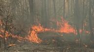 Floresta Nacional está fechada após incêndio