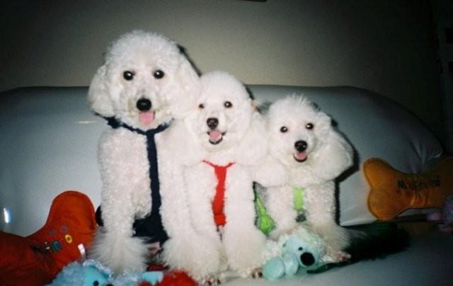 Nina, Bunny e Cacau cães Sílvia (Foto: Sílvia Regina/Arquivo Pessoal)
