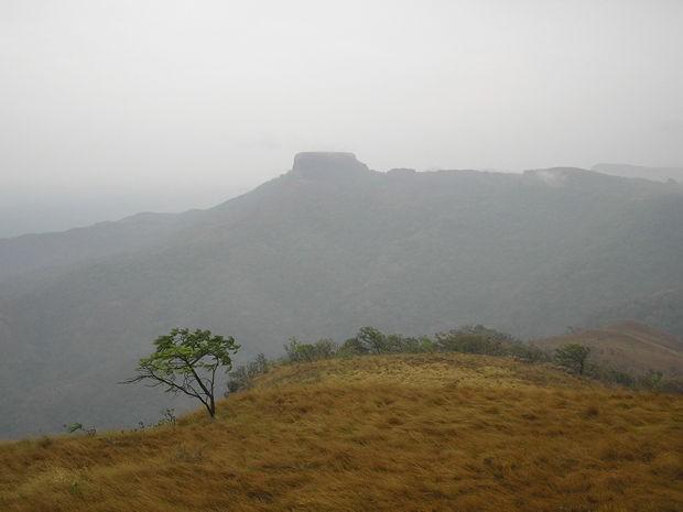 Morro de São Jerônino foi um dos pontos consumidos pelo fogo (Foto: Prevfogo)