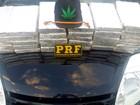 Folha de maconha em boné leva PRF a apreender mais de 40 kg da droga