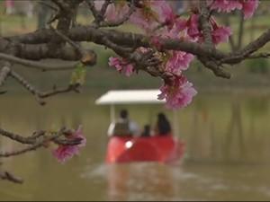 Flores trouxeram clima romântico e harmonioso (Foto: Reprodução / TV TEM)
