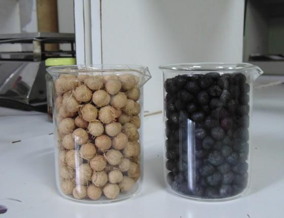 Sementes antes e depois do processo químico de ativação para transformar em filtro de açaí (Foto: Divulgação)