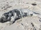 Filhote de foca é resgatado em praia de Nova York
