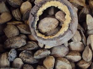 O cheiro da Castanha do Pará está na categoria dos adocicados, que também são marcantes. (Foto: Thais Rezende/G1 PA)