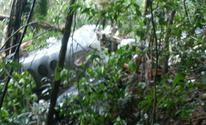 Avião que caiu em Paraty é de família de empresários de Mogi (Sandro Soares/Arquivo Pessoal)