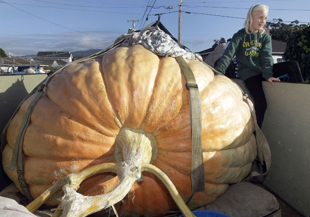Abóbora de 805,12 quilos venceu competição na Califórnia. (Foto: Tony Avelar/AP)