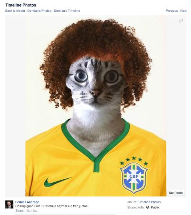 Até os gatos querem ser David Luiz (Foto: Reprodução/Facebook)