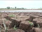 Estiagem causa morte de rebanho e prejuízo em lavouras no Maranhão