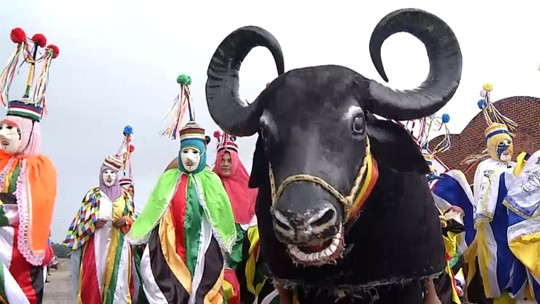 São Caetano de Odivelas preserva tradição do boi de máscaras