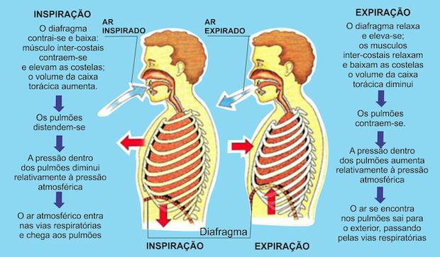 Respiração (Foto: Colégio Qi)