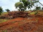Polícia encontra área desmatada e apreende lenha em fazenda de Prata