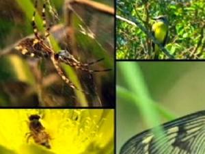 Pelo menos 50 espécies ameaçadas de extinção vivem na região (Foto: Reprodução/RBS TV)