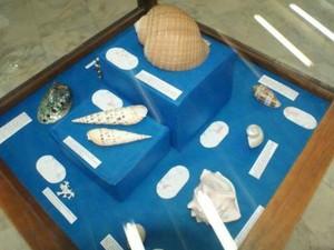 Exposição mostra a formação das conchas  (Foto: Divulgação/UEPG)