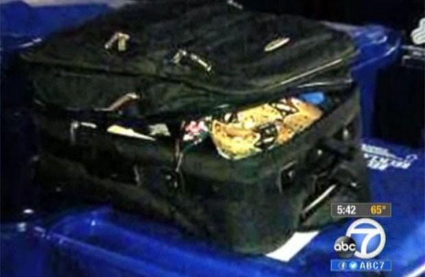Funcionário de abrigo levou susto ao achar cobra em mala (Foto: Reprodução)