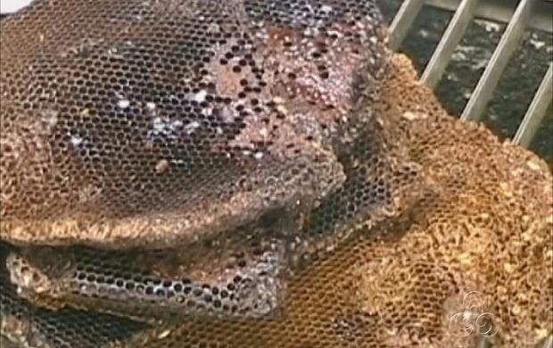 Foram retirados 10 litros de mel de dentro da imagem da santa (Foto: Amazonas TV)