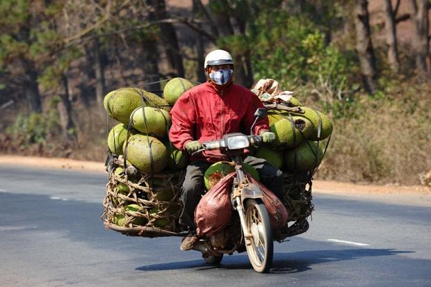 Agricultor foi flagrado em uma moto supercarregada de jacas (Foto: Hoang Dinh Nam/AFP)