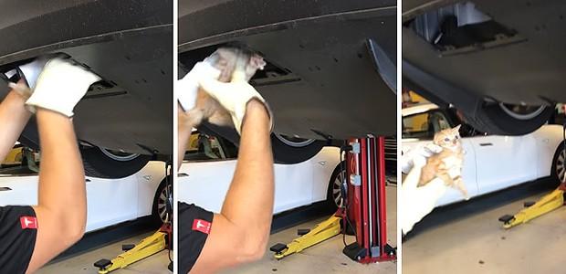 Gatinho é resgatado de para-choque do Tesla Model X (Foto: Tesla)