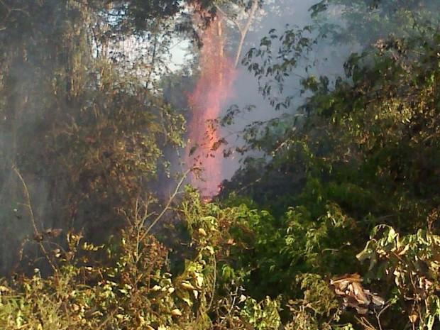 Incêndio começou nesta terça-feira (6) (Foto: Cima Fubá/ Incaper)