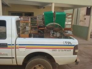 Aves foram apreendidas e entregues ao Ibama  (Foto: Polícia Militar/Divulgação)