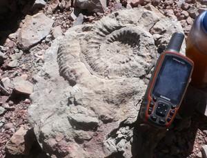 Maximo Kausch Anemonita fóssil alma negra argentina (Foto: Maximo Kausch)
