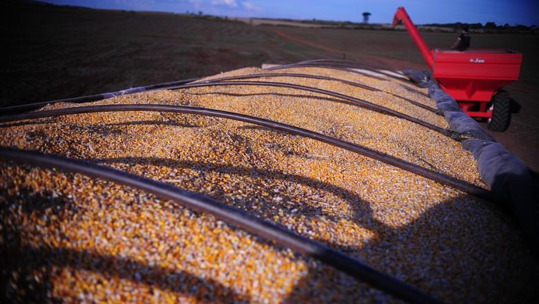 milho-colheita-graos (Foto: Ernesto de Souza/Ed. Globo)