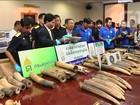 Contrabando de marfim muda rota para driblar fiscalização, diz Tailândia