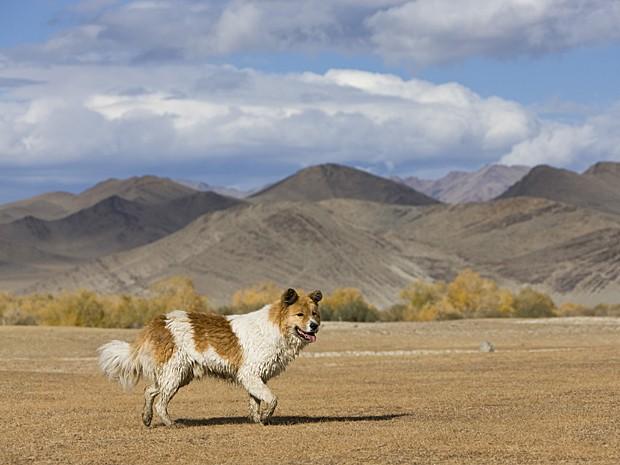 Fóssil encontrado é de ancestral do cão moderno (Foto: J.-L. Klein & M.-L. Hubert/Biosphoto/Arquivo AFP)