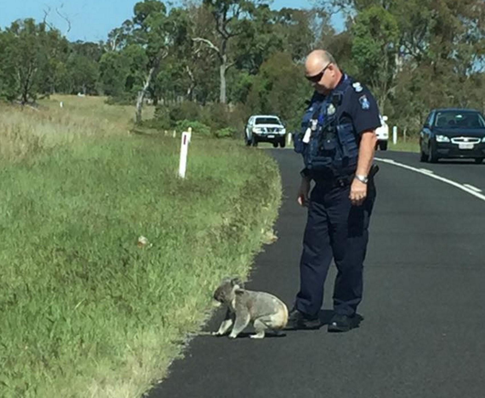 Imagens mostram que coala parou carros em rodovia (Foto: Reprodução/Facebook/Mike Phipps)